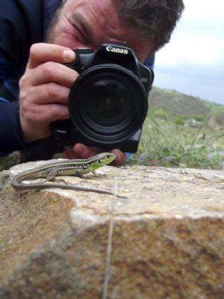 Herptil Gözlemcisi (N/A Herptil Observator)